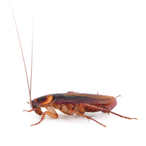 Cockroach Pest Control - Hackettstown, NJ