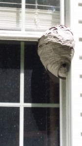 bald face hornet nest in Hackettstown NJ