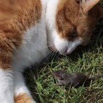 Will a Cat Keep Mice Away?